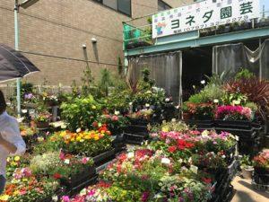 珈琲花の近所のヨネダ園芸さん